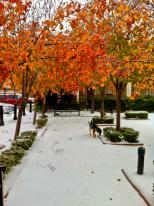 Autumn in Winter?